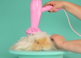 Animal getting a hair brushing