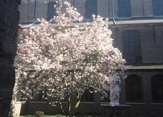 Blossoming tree in courtyard