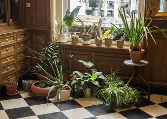 Le Botaniste Gent