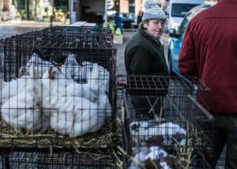 Oude beestenmarkt Gent